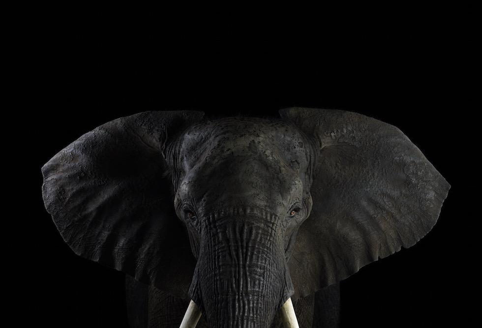 Brad-Wilson-Andana-foto-elefante